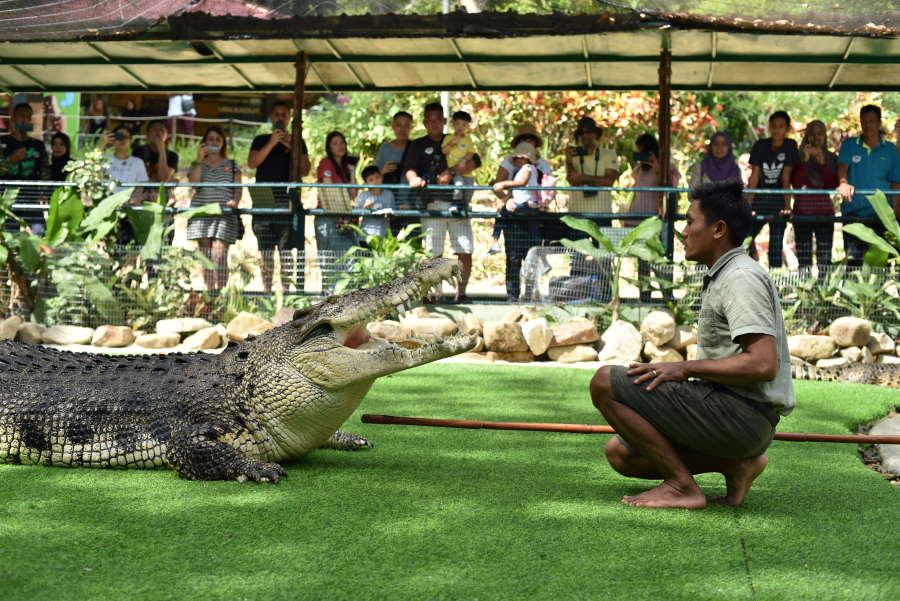 bujang lang di crocodile farm langkawi