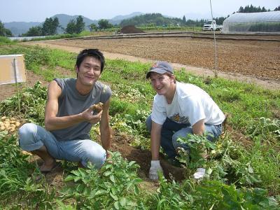 ladang sayur