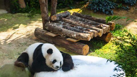 tempat menarik di kl - panda zoo negara