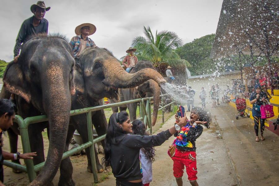 a famosa theme park safari wonderland