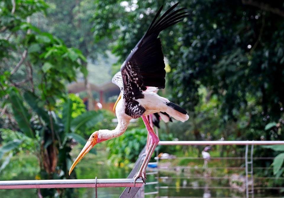 burung di zoo negara