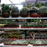 Cactus Valley - tarikan best & cantik di cameron highlands