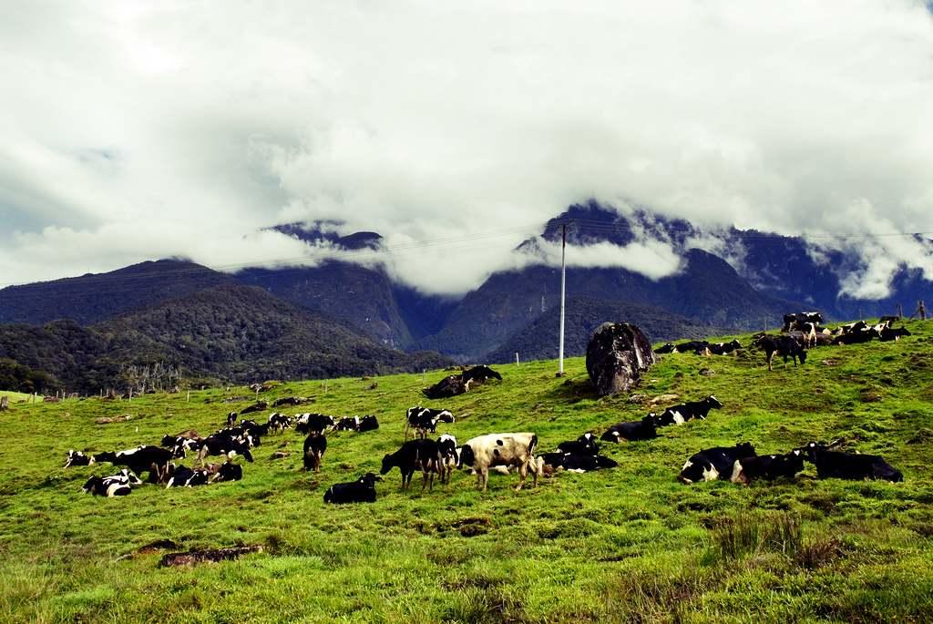 Desa Dairy Farm - tempat mesti lawat di kota kinabalu sabah