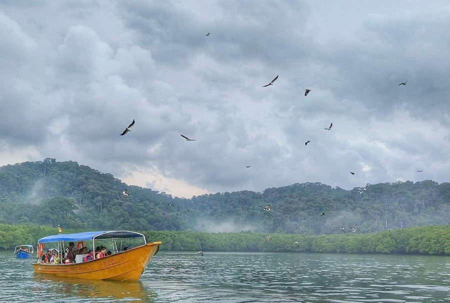 helang di island hopping pulau langkawi