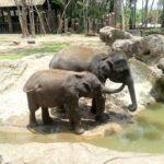 Taman Rekreasi dan Mini Zoo Kemaman