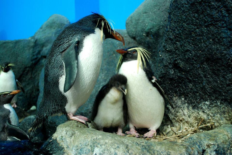 penguin di underwater world langkawi water