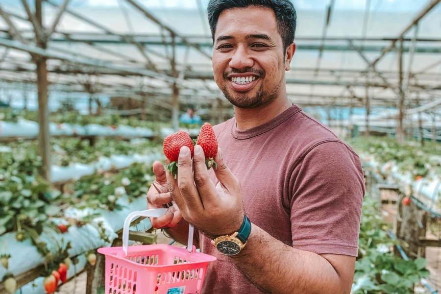 raju hills strawberry farm cameron highlands