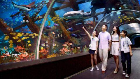 tarikan spore sea reasorts world singapore