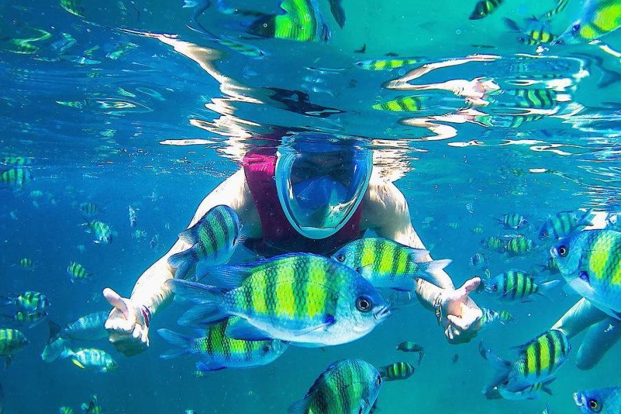 tengok ikan dengan pakej snorkeling pulau payar langkawi