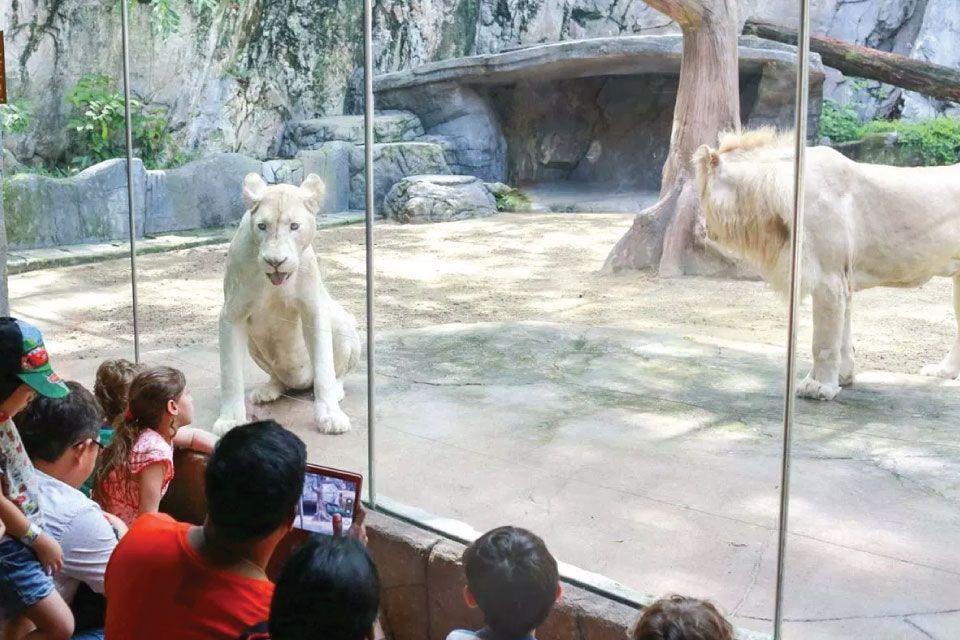 sunway lagoon mini zoo