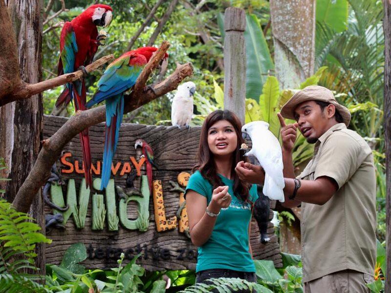 petting zoo sunway lagoon