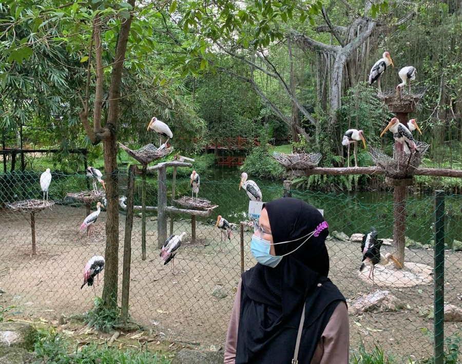 taman burung pulau pinang