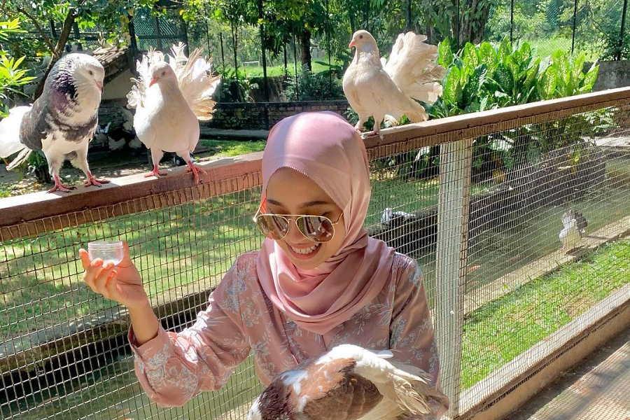 taman burung pulau pinang - tempat menarik di penang untuk kanak kanak