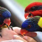taman burung penang