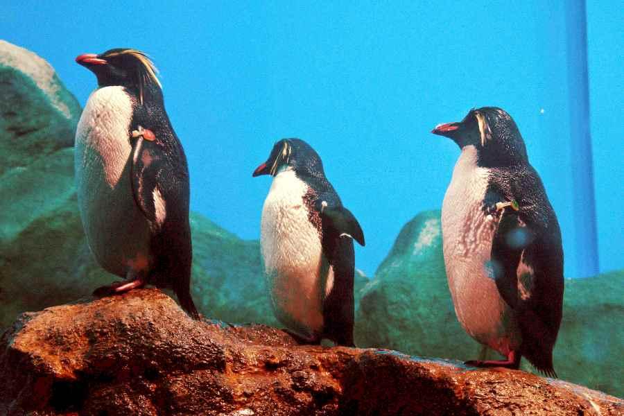 penguin underwater world langkawi malaysia