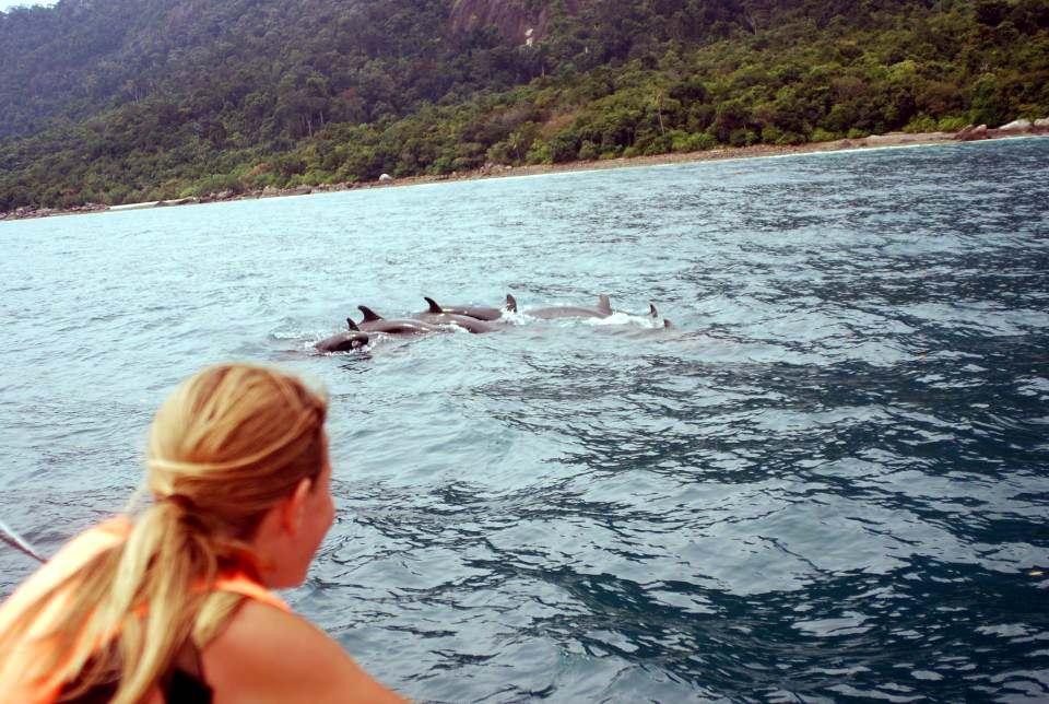 japamala-dolphin