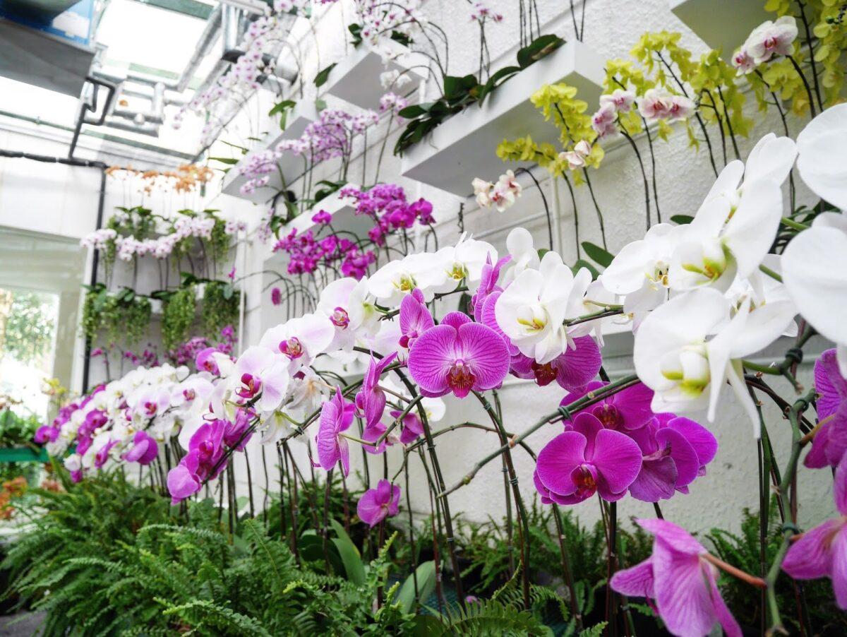 orkid garden majestic