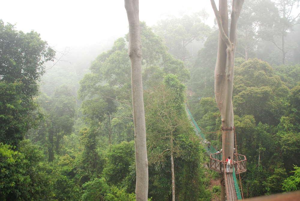 danum valley treetop walk