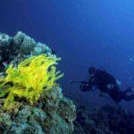 batu karang kuning taman laut tunku abdul rahman sabah
