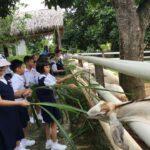 saneen goat farm - tempat menarik di penang utk budak-budak