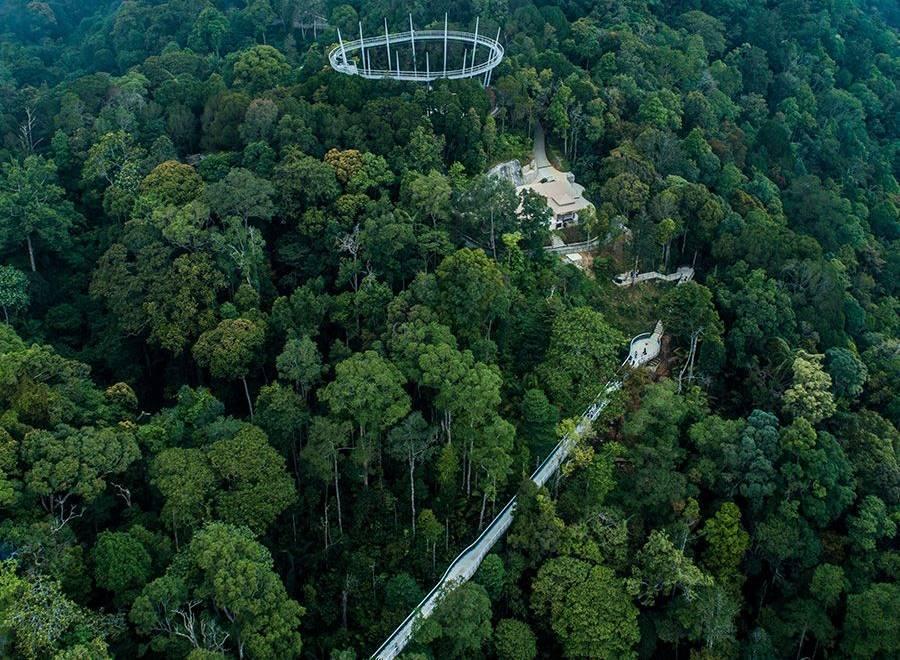 langur walk the habitat penang