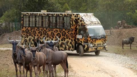 Bukit Gambang Safari