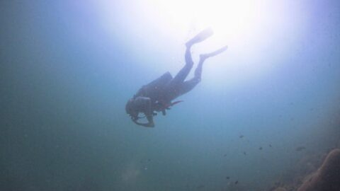 scuba diving pulau payar