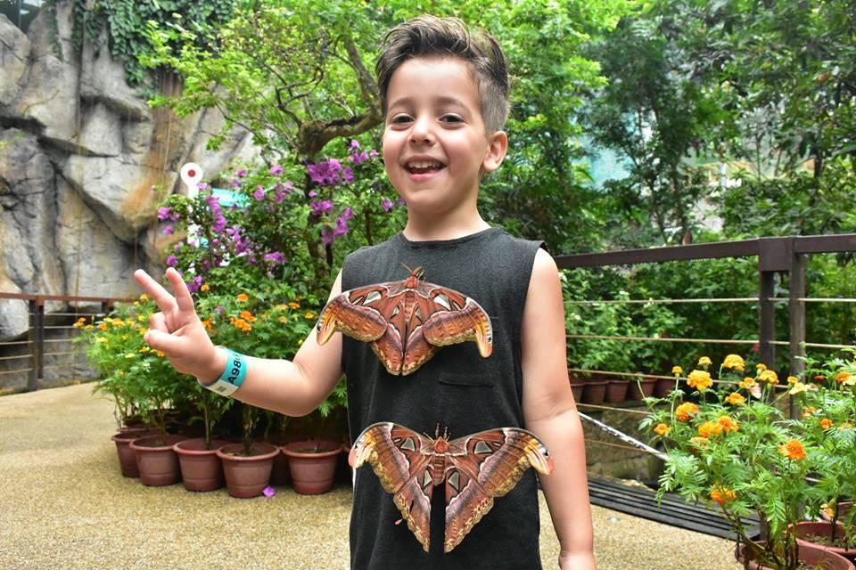 atlas moth di baju dalam taman rama rama pulau pinang