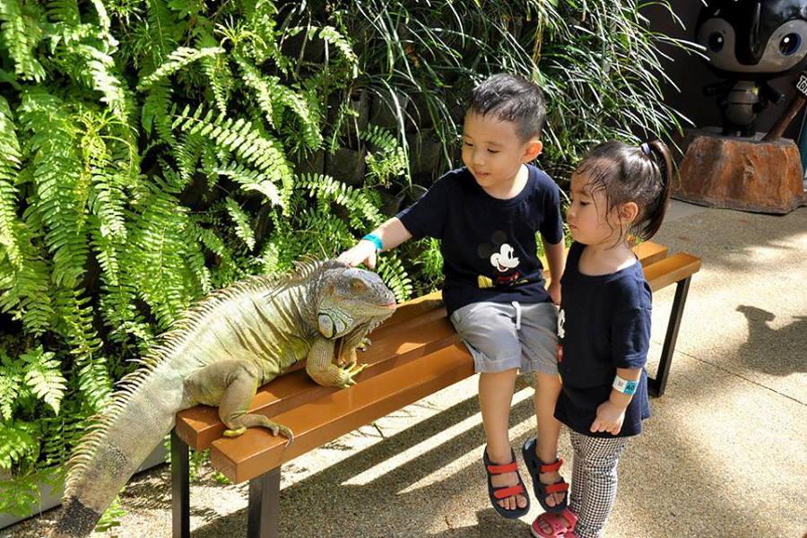 tarikan pulau pinang - pegang iguana di entopia penang taman reptilia dan rama rama