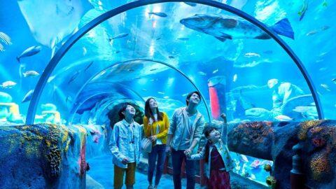 sealife malaysia johor tunnel