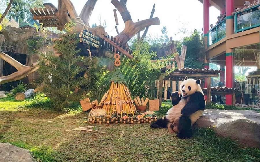 istana panda bogor indonesia