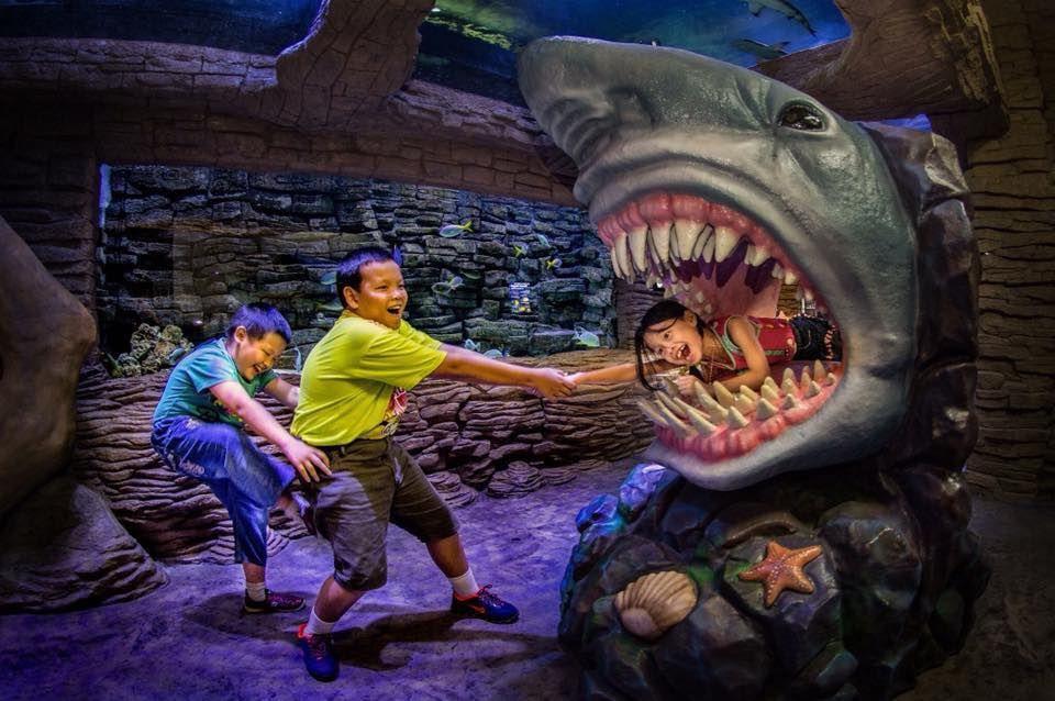shark ocenarium melaka