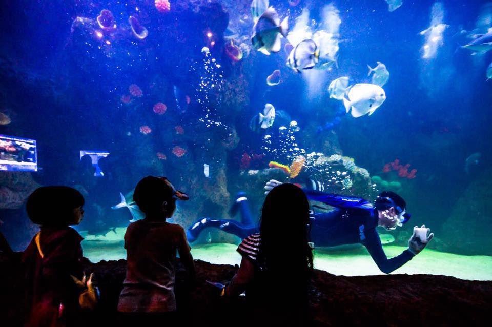 the shore aquarium melaka diver