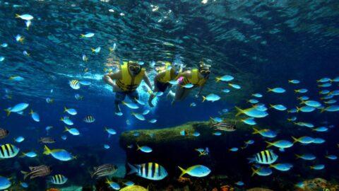 snorkeling di adventure cove