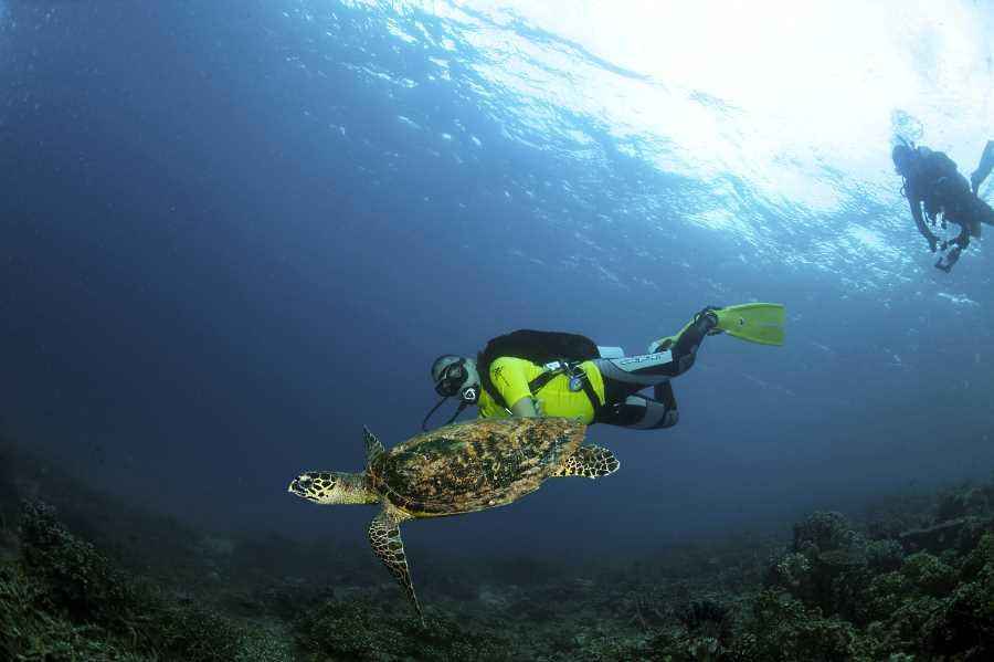 snorkeling dengan penyu di pulau aur