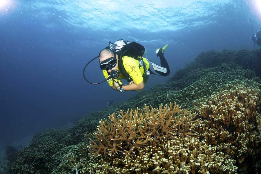 snorkeling di pulau aur mersing