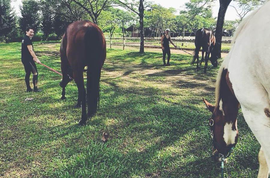 kuda kuda di hv riding academy