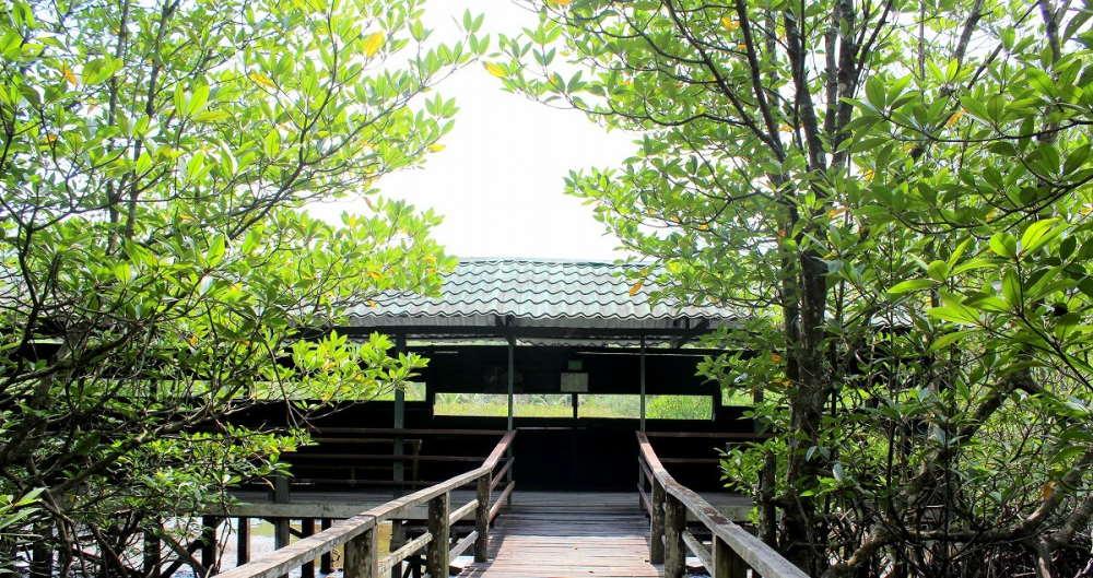 platform kayu kk wetlands