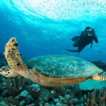 pulau layang layang sea turtle