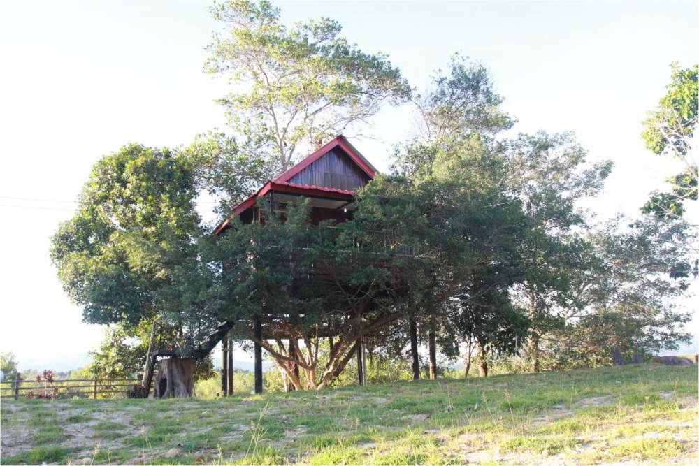 rumah pokok di borneo ant house