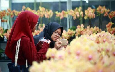 pengunjung phalaenopsis ulu yam