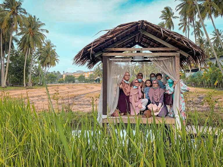 sawah padi kampung agong