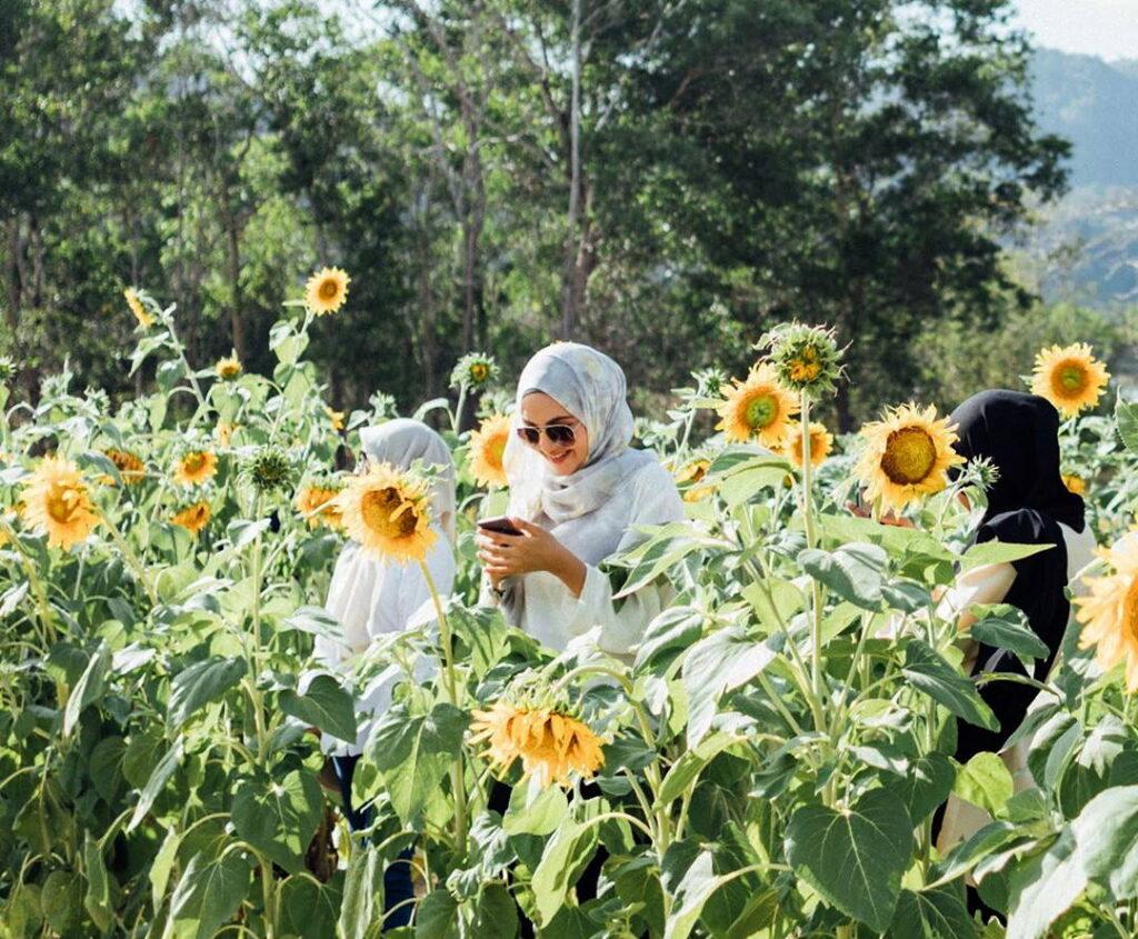 ladang bunga matahari ini kalau bergambar tak macam di malaysia